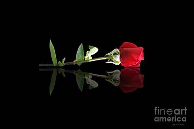 Refection Photograph - Single Rose by Stephanie Laird