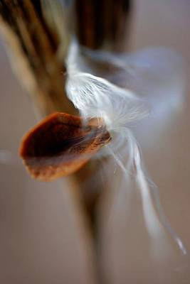 Photograph - Single Seed Emerging by Beth Akerman
