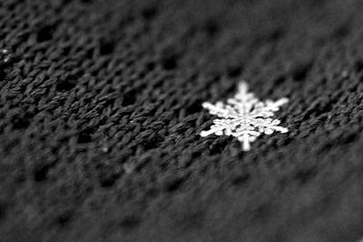 Photograph - Single Snowflake by Catherine Murton