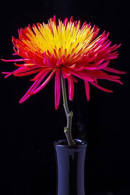 Chrysanthemums Photograph - Single Spider Mum by Garry Gay