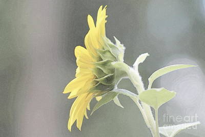 Photograph - Single Sunflower by Leone Lund