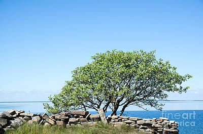 Rights Managed Images Photograph - Single Tree At Coast by Kennerth and Birgitta Kullman