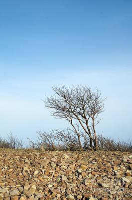 Photograph - Single Tree At Stony Coast by Kennerth and Birgitta Kullman
