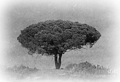 Walking Photograph - Single Tree by Clare Bevan