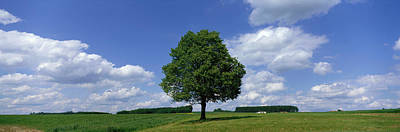 Field. Cloud Photograph - Single Tree, Germany by Panoramic Images