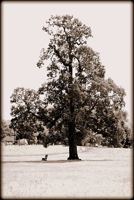 Photograph - Single Tree Journey by Kathy Sampson