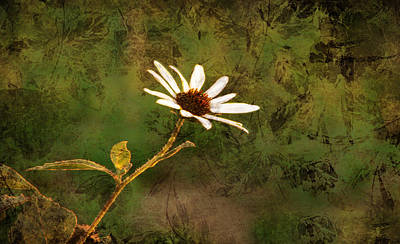 Crosswalk Digital Art - Single White Daisy  by Beverly Guilliams