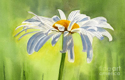 Floral Painting - Single White Daisy Blossom by Sharon Freeman