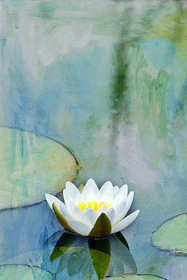 Photograph - Single White Water Lily by Rebecca Cozart