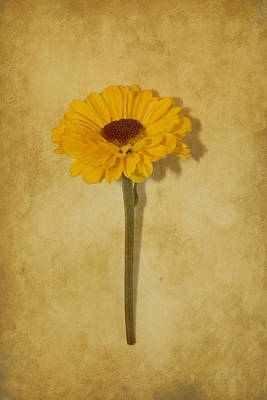 Sean Rights Managed Images - Single Yellow Flower Royalty-Free Image by Anita Miller