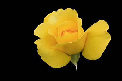 Photograph - Single Yellow Rose by Susan Leonard