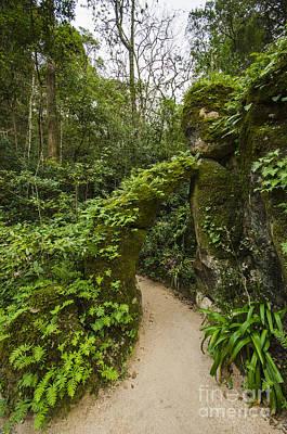 Photograph - Sintra Pathway by Deborah Smolinske
