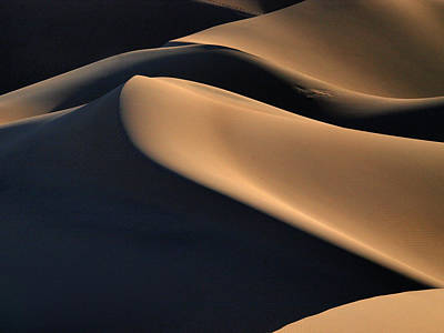 Photograph - Sinuous Dunes  by Joe Schofield