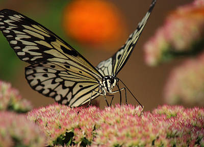 Photograph - Sip Of The Nectar by Randy Hall