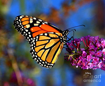 Sipping Monarch Art Print