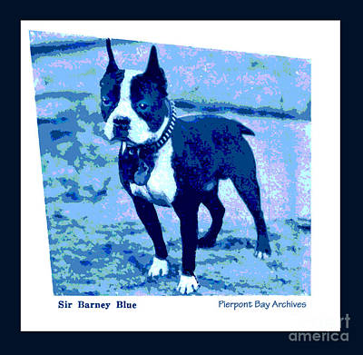 Artful And Whimsical Digital Art - Sir Barney Blue. Champion Boston Terrier by Pierpont Bay Archives