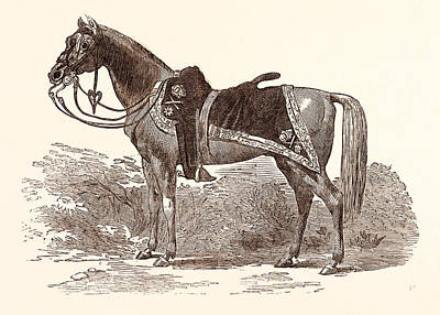 Chargers Drawing - Sir Charles Napiers Favourite Charger by English School