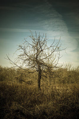 Virginia Photograph - Sister To The Fates by Shane Holsclaw