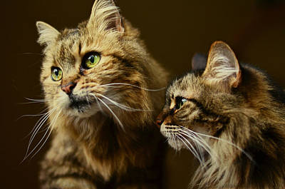Photograph - Sisters With Whiskers by Fraida Gutovich