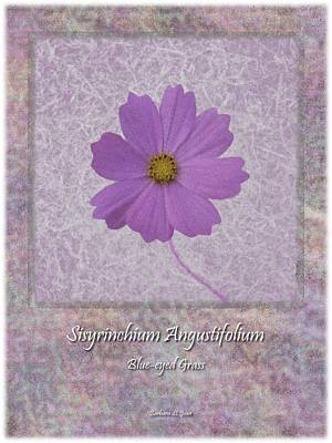 Digital Art - Sisyrinchium Wild Flower Bc Poster 4 by Barbara St Jean