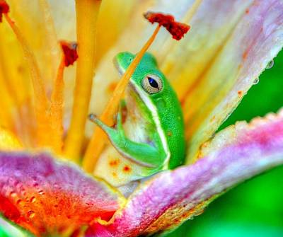 Frog Photograph - Sit A Spell by Charlotte Schafer