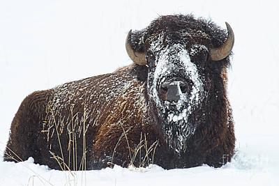 Photograph - Sitting Bull by Jim Garrison