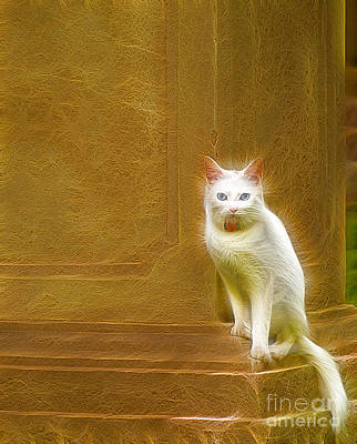 Pedigreed Digital Art - Sitting Cat by Odon Czintos