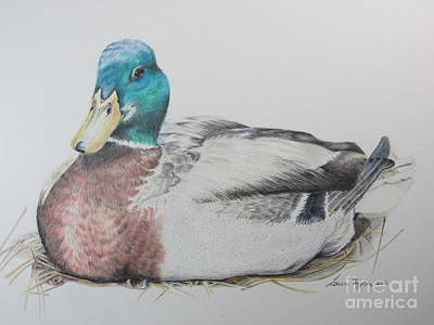 Sitting Duck Art Print by Laurianna Taylor