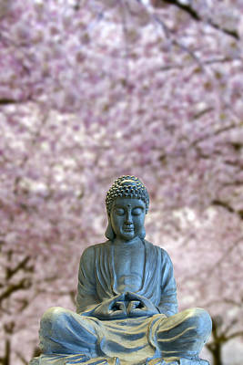 Everett Collection - Sitting Full Body Buddha with Cherry Blossom Trees by David Gn