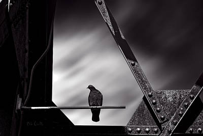 Rivets Photograph - Sitting On A Stick by Bob Orsillo