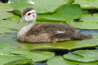 Photograph - Sitting Pretty by Frank Townsley