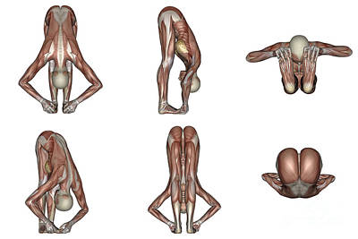 Muscular Digital Art - Six Different Views Of Big Toes Yoga by Elena Duvernay