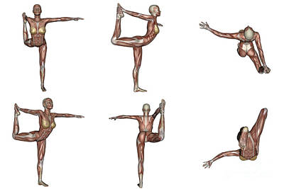 Muscular Digital Art - Six Different Views Of Dancer Yoga Pose by Elena Duvernay