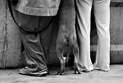 Funny Dog Wall Art - Photograph - Six Feet by Lev Tsimring