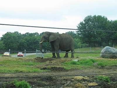 Sixflag Photograph - Six Flags Great Adventure - Animal Park - 121223 by DC Photographer