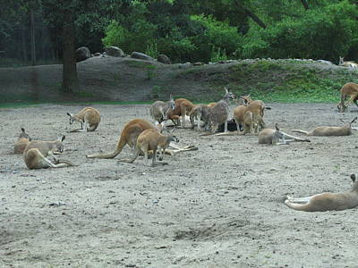 New Photograph - Six Flags Great Adventure - Animal Park - 121270 by DC Photographer