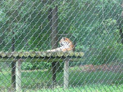 Sixflag Photograph - Six Flags Great Adventure - Animal Park - 121277 by DC Photographer