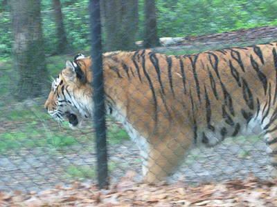 Amusement Photograph - Six Flags Great Adventure - Animal Park - 121278 by DC Photographer
