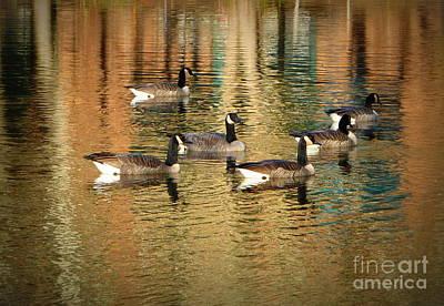 Photograph - Six Geese Swimming by Susan Garren