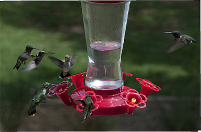 Photograph - Six Hummingbirds by Penny Lisowski