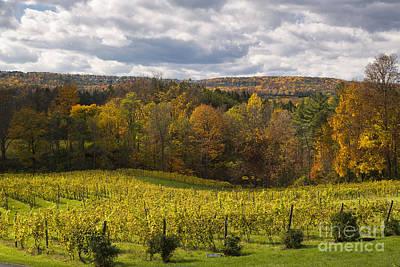 Finger Lakes Photograph - Six Mile Creek Vineyard by Michele Steffey