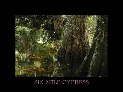 Photograph - Six Mile Cypress Fort Myers Florida by David Weeks