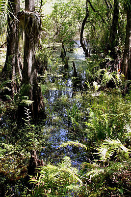 Photograph - Six Mile Cypress Swamp by Joseph G Holland
