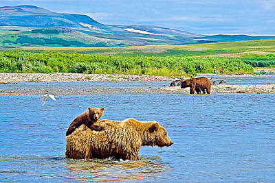 Six-month-old Cub Riding On Mom's Back To Cross Moraine River In Katmai National Preserve-alaska Art Print