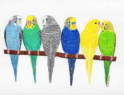 Parakeet Drawing - Six Parakeets by Rita Palmer