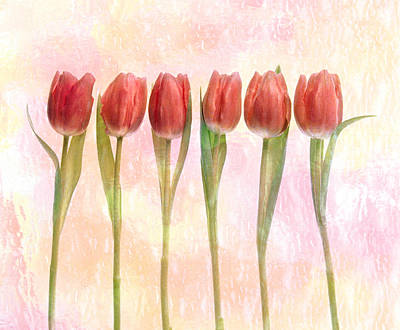 Dark Pink Photograph - Six Pink Tulips With Green Stems by Panoramic Images