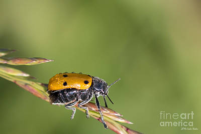 Wilderness Camping - Six-spotted Beetle by Jivko Nakev