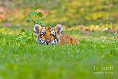 Sizing Up The Situation Art Print by Ashley Vincent