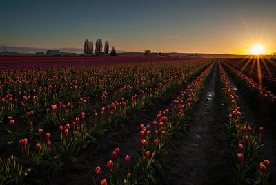 Skagit Dusk Tulip Fields Art Print by Mike Reid
