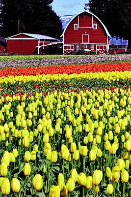 Photograph - Skagit Farm by Benjamin Yeager